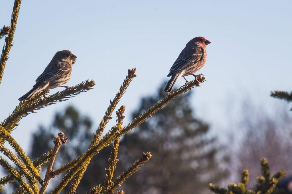 Promatranje ptica